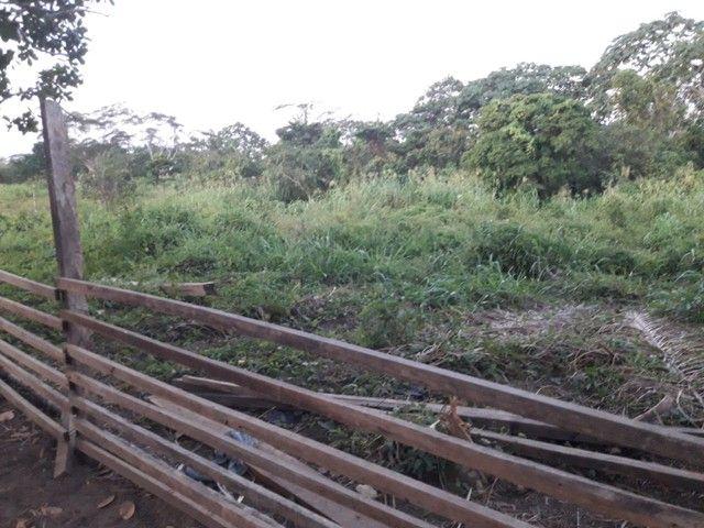 Vendo uma colônia em Sena Madureira Rio purus - Foto 3
