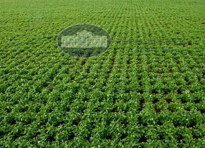 Fazenda c/ Dupla Aptidão