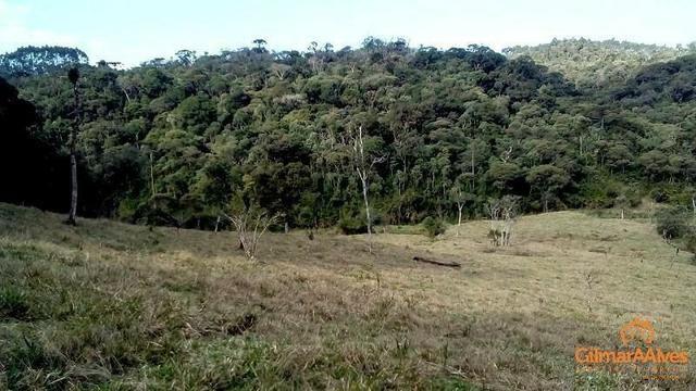 Fazenda para Venda, São Bento do Sul / SC, bairro Sertãozinho - Foto 7