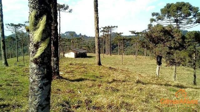 Fazenda para Venda, São Bento do Sul / SC, bairro Sertãozinho - Foto 10