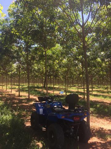 Fazenda em Frutal Minas Gerais Triângulo Mineiro - Foto 15