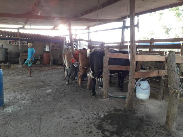 Fazenda à venda ou troca R$ 12 mil o Hectare- Zona Rural - Luziânia/GO - Foto 13