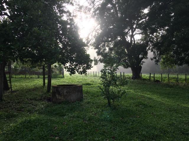 Bela fazenda com 450 hectares, super estruturada em Itapecuru -Mirim! - Foto 2