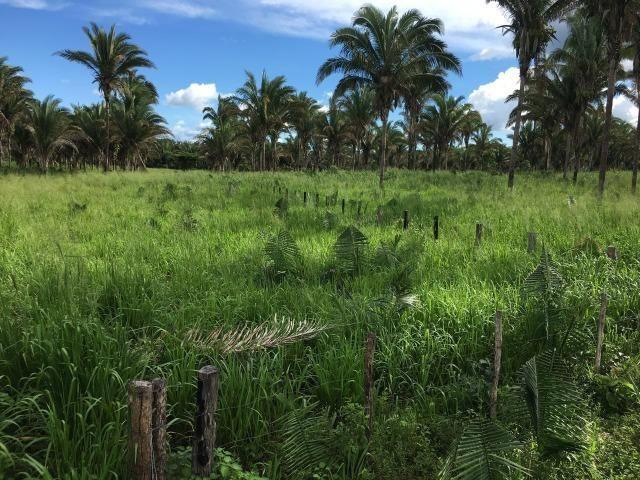Bela fazenda com 450 hectares, super estruturada em Itapecuru -Mirim! - Foto 10