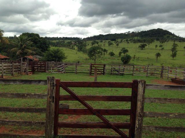 25 Alqueires-Avelinópolis Goiás-Próx. Goiânia-Excelente Preço R$ 150.000,00 o Alqueire - Foto 20
