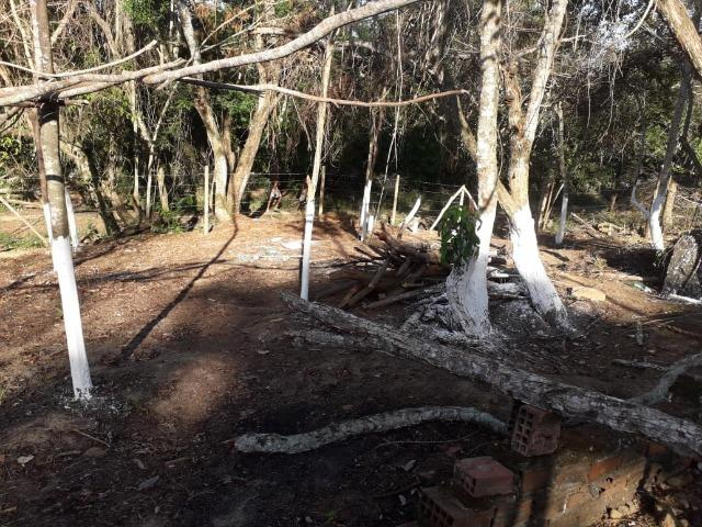 Terreno em Pindobal - Bambuí - Maricá - Foto 10
