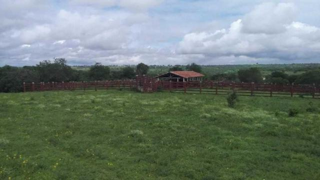 Excelente Fazenda em Feira de Santana-BA - Foto 11