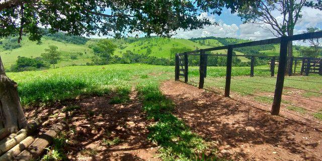Fazenda especial em inhumas,19 alqueires - Foto 2