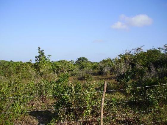 Terrenos em Pium de vários tamanhos e preços - Foto 9