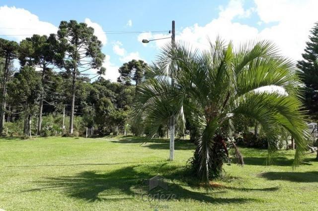Chácara com 42.350,00m² em Agudos do Sul - Foto 2