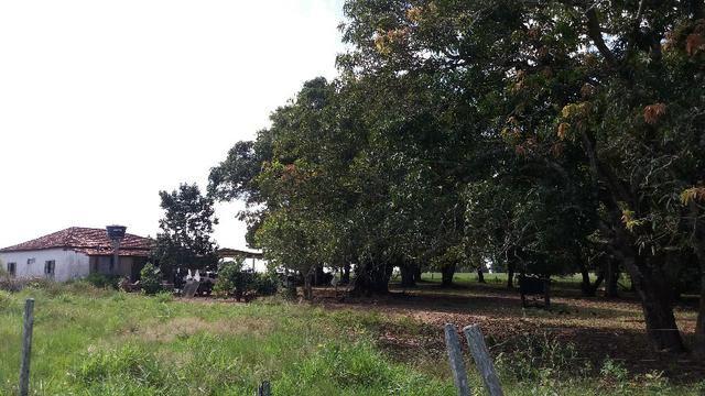 (Fazenda com 297ha em Mato Grosso) no município de Alto Paraguai(MT-409 KM35) - Foto 11