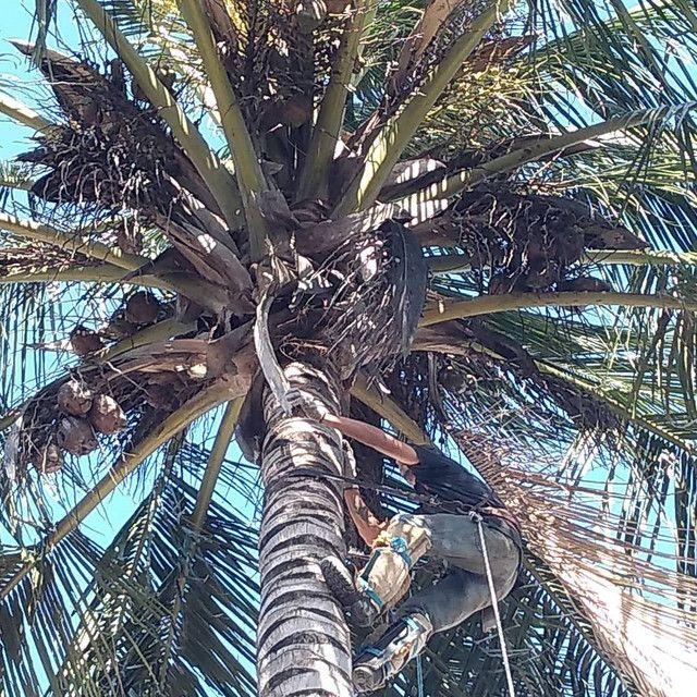 Limpeza de coqueiros
