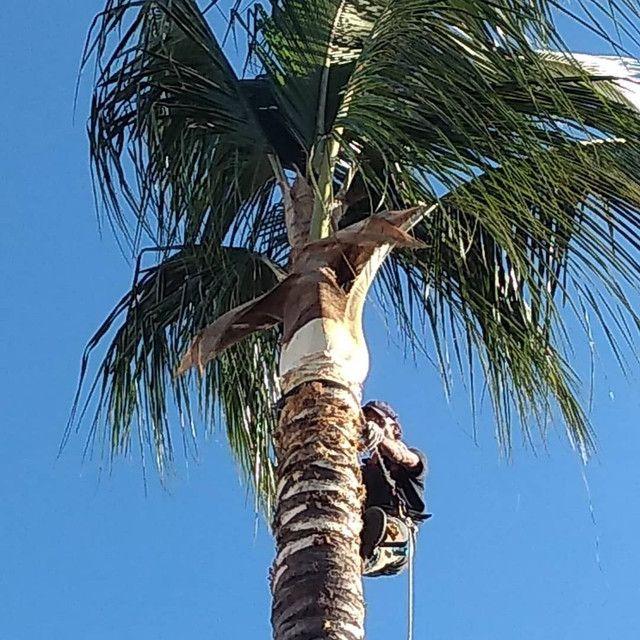 Limpeza de coqueiros - Foto 2