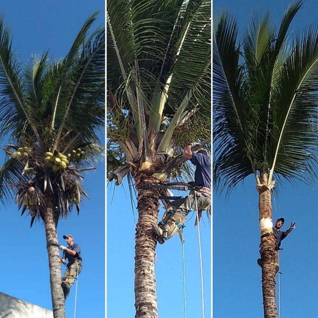 Limpeza de coqueiros - Foto 6