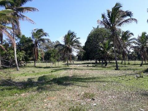 Fazenda 85 hec Vendo com Porteira Fechada - Foto 10