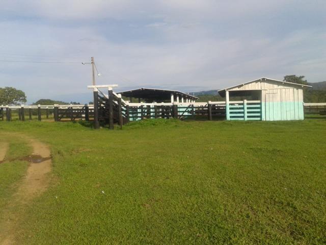 Fazenda - 981 Hectares - Cuiabá/MT - Foto 6