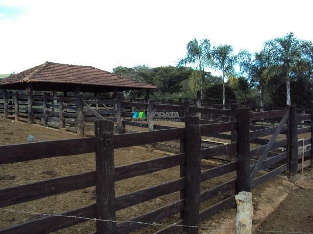 FAZENDA À VENDA - 300 HECTARES - PITANGUI (MG) - Foto 3