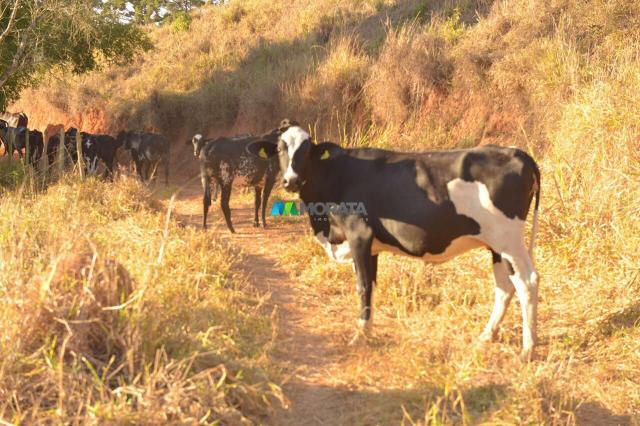 Fazenda à venda - 40 hectares - região santana dos montes (mg) - Foto 5