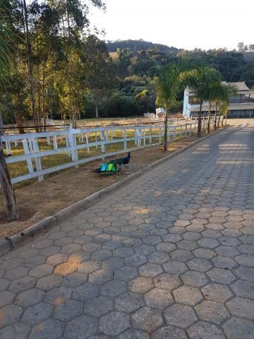 Fazenda / haras / pecuária leiteira - 20 hectares - piedade dos gerais (mg) - Foto 10