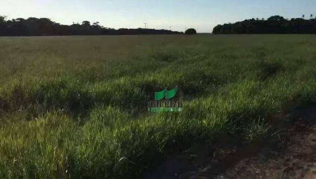 Fazenda rural à venda, belmonite, belmonte. - Foto 9