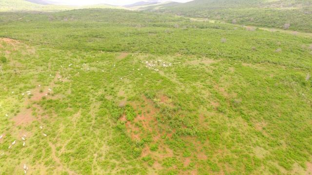 Fazenda Jaguaquara - Foto 17
