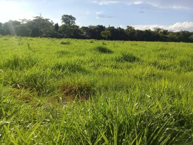 Fazenda 80 hectares próximo a Cuiabá - Foto 11