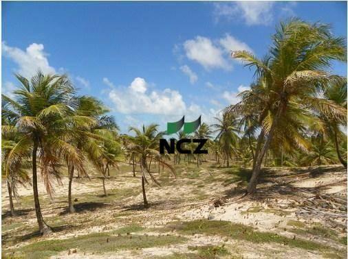 Fazenda à venda, 380000 m² por r$ 3.040.000 - litoral norte - jandaíra/ba - Foto 10