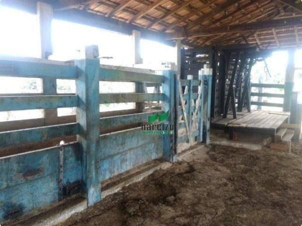 Linda fazenda à venda, 8000000 m² por r$ 6.300.000 - inocoop - itamaraju/ba - Foto 20