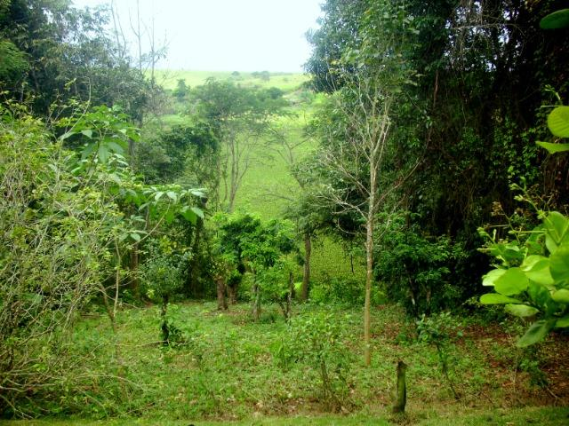 Terreno 450 m2 Condomínio Vale do Jacarandá - Foto 13