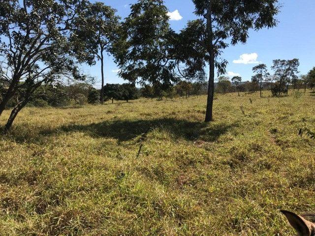 Fazenda 65 Ha em Onça de Pitangui - MG - Foto 14