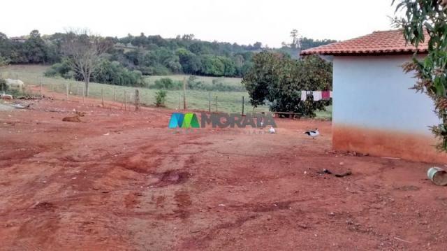 Fazenda à venda - 75 hectares - onça do pitangui (mg) - Foto 14