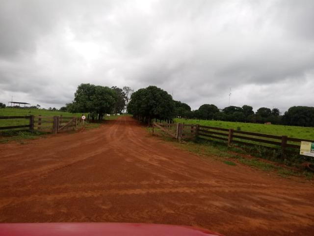 Fazenda - 981 Hectares - Cuiabá/MT - Foto 2