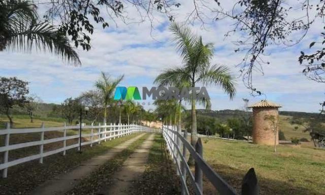 Fazenda pecuária - 220 hectares - belo vale (mg)