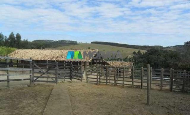 Fazenda pecuária - 220 hectares - belo vale (mg) - Foto 14