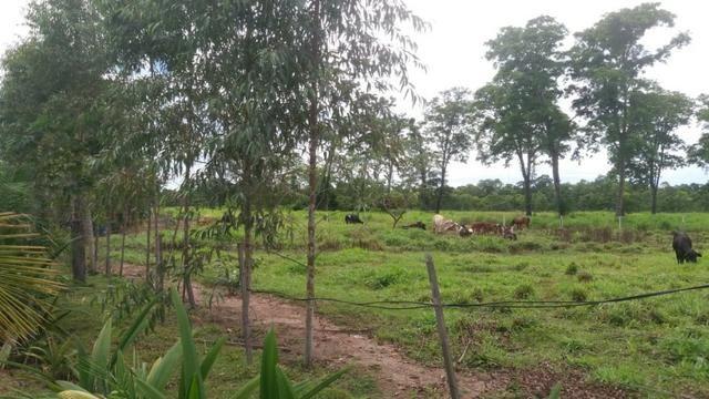 Fazenda - 1450 Hectares - Nossa Senhora do Livramento/MT - Foto 12