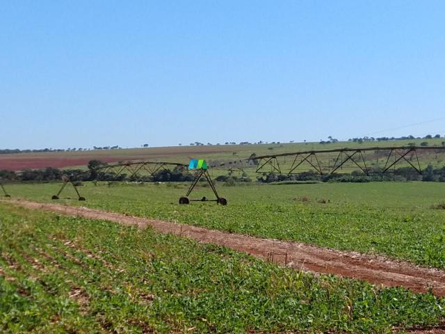 FAZENDA A VENDA - 300 hectares - REGIÃO PITANGUI (MG) - Foto 8