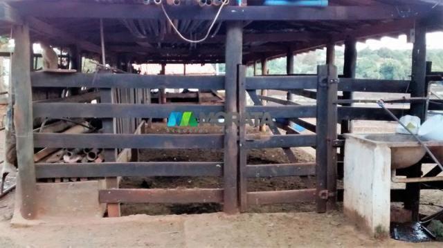 Fazenda à venda - 75 hectares - onça do pitangui (mg) - Foto 2