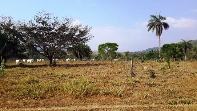 Fazenda 142 ha Serra de São Vicente MT - Foto 15