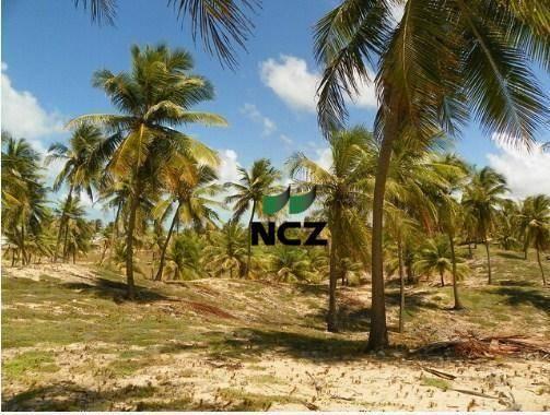 Fazenda à venda, 380000 m² por r$ 3.040.000 - litoral norte - jandaíra/ba - Foto 6
