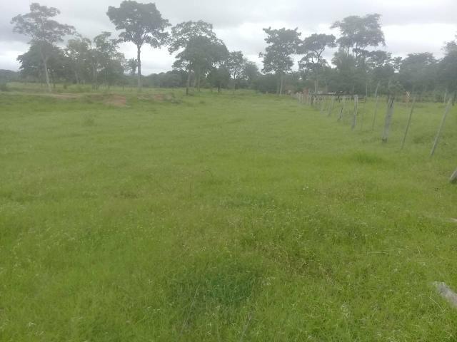 Fazenda 80 hectares próximo a Cuiabá - Foto 3