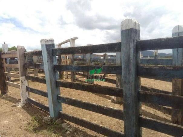 Linda fazenda à venda, 8000000 m² por r$ 6.300.000 - inocoop - itamaraju/ba - Foto 18