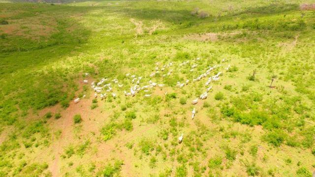 Fazenda Jaguaquara - Foto 8