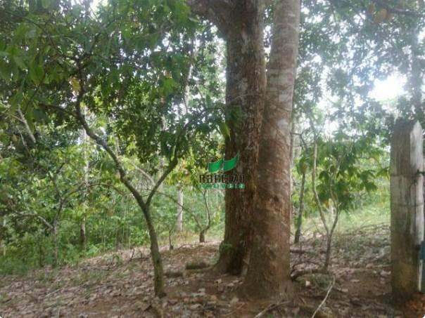Linda fazenda à venda, 8000000 m² por r$ 6.300.000 - inocoop - itamaraju/ba - Foto 17
