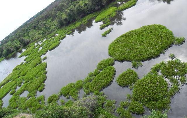 Fazenda com 140 hectares no Passarão, a 65 km de Boa vista/RR, ler descrição do anuncio - Foto 2