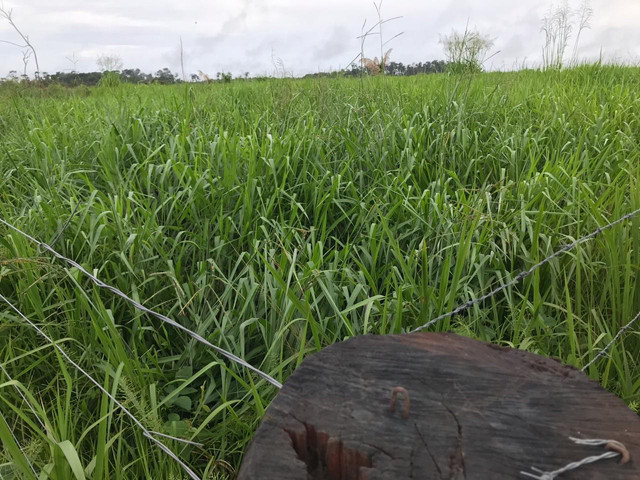 Fazenda 300 hec no Maranhão - Foto 8