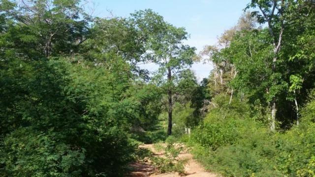 Fazenda à venda, 150000000 m² por R$ 55.809.000,00 - Zona Rural - Pilão Arcado/BA - Foto 8