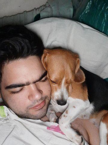 Para cães e gatos: Visitação, passeio e hospedagens. - Foto 5