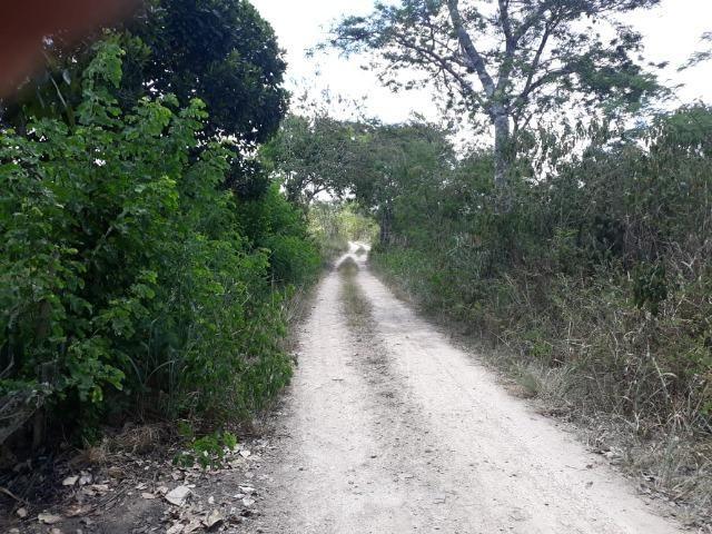 Chã de Alegria= Vend. 125 mil reais=10 Hect.=Casa,Pastos,Energia,Água e mais - Foto 18