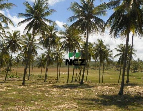 Fazenda à venda, 380000 m² por r$ 3.040.000 - litoral norte - jandaíra/ba - Foto 5