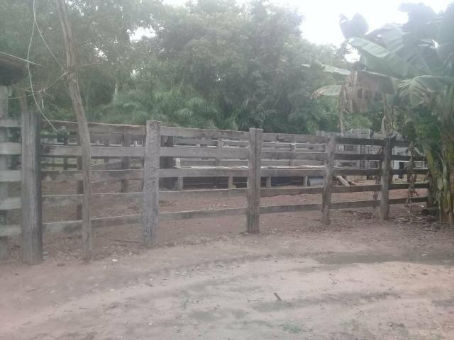 Fazenda 80 hectares próximo a Cuiabá - Foto 9